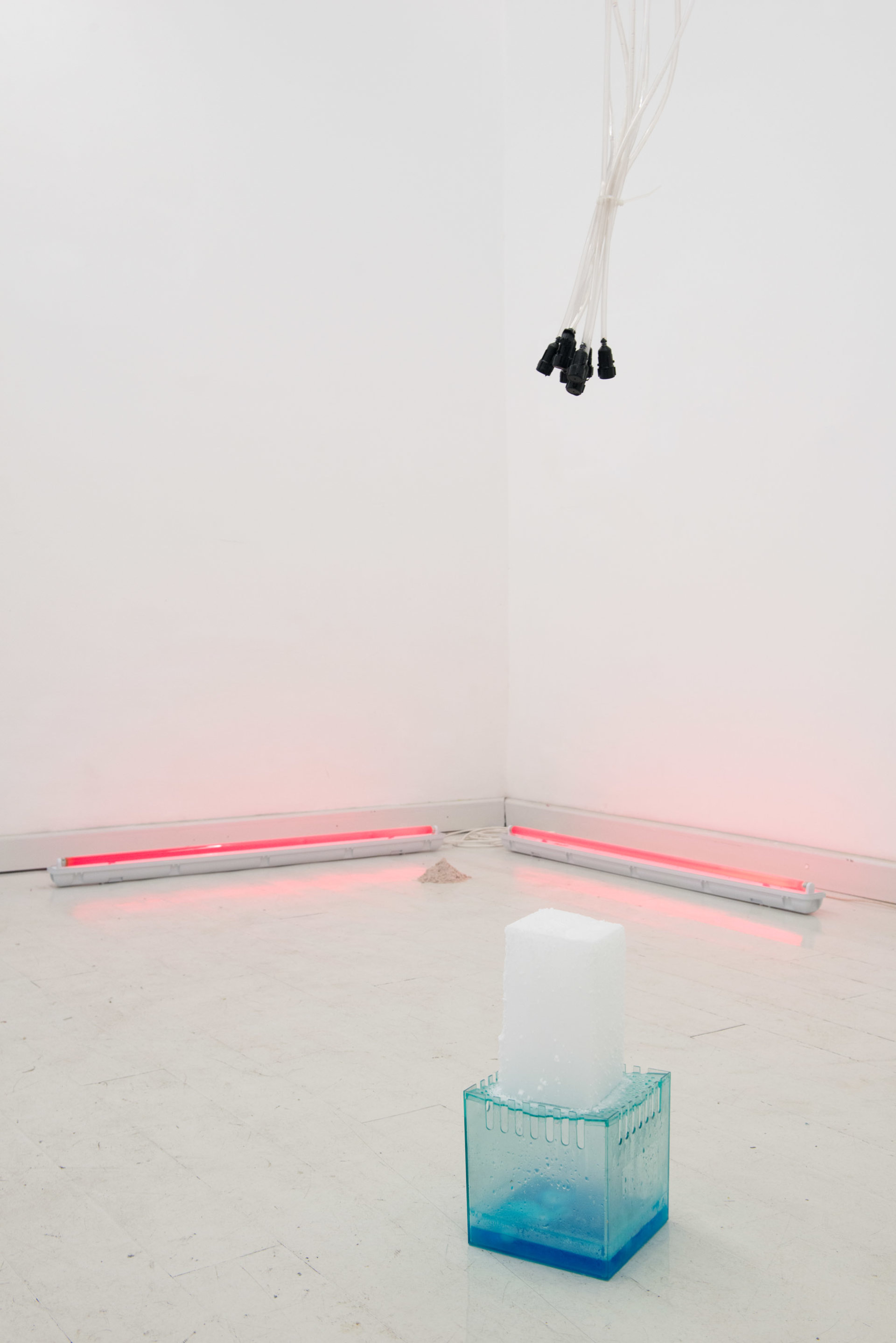 U+29DC: Index of/ Enrico Boccioletti Daisyworld, 2015